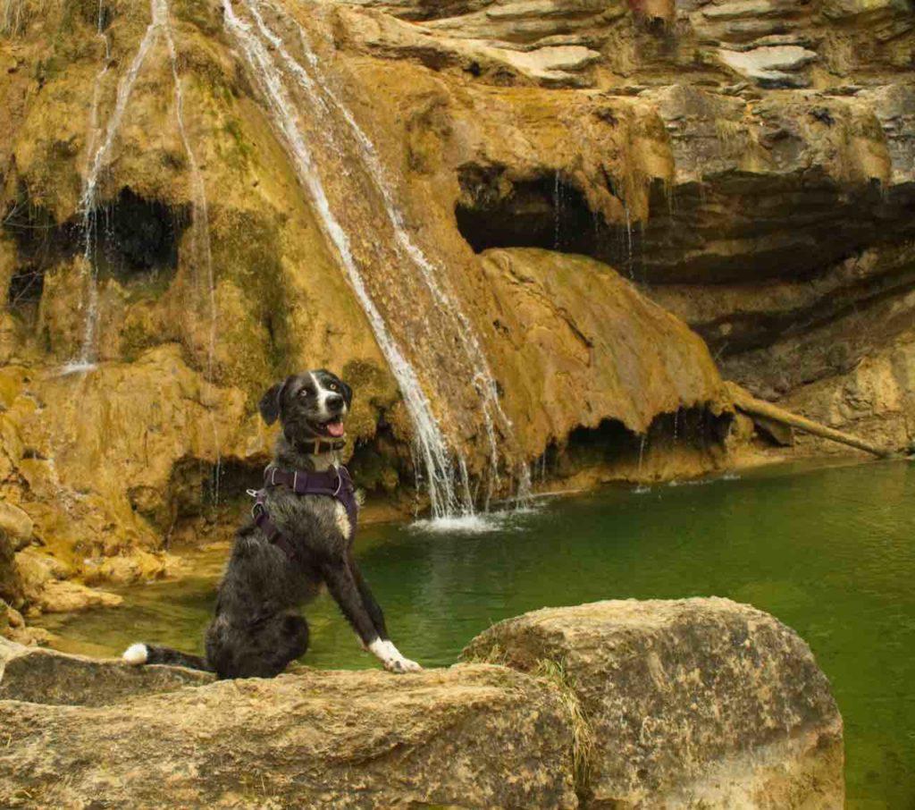 7 gorgs Campdevànol con perro