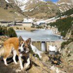 Cami Vell de Queralbs a Núria con perro