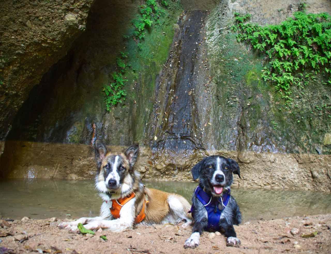 Saltos de agua Canaletes perro