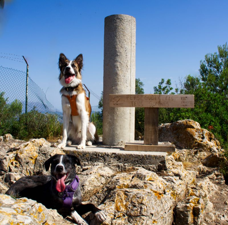 Puig d'Agulles con perro 100 cims
