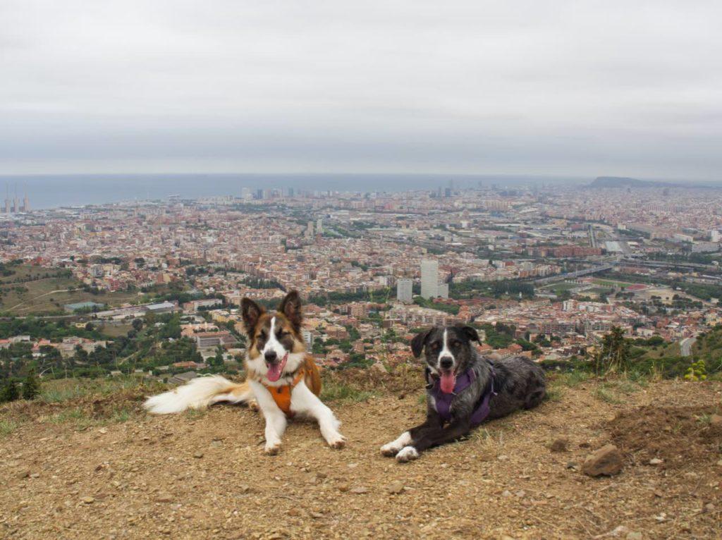 Puig Castellar con perro 100 cims