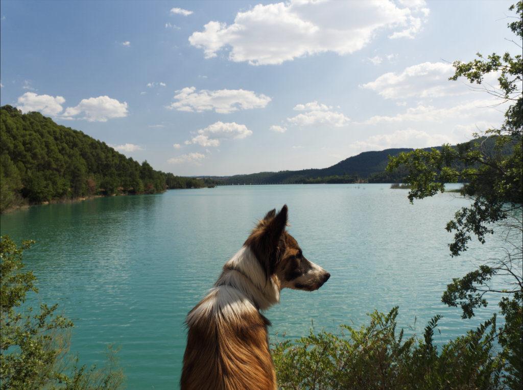 Pantano de Sant Ponç con perro