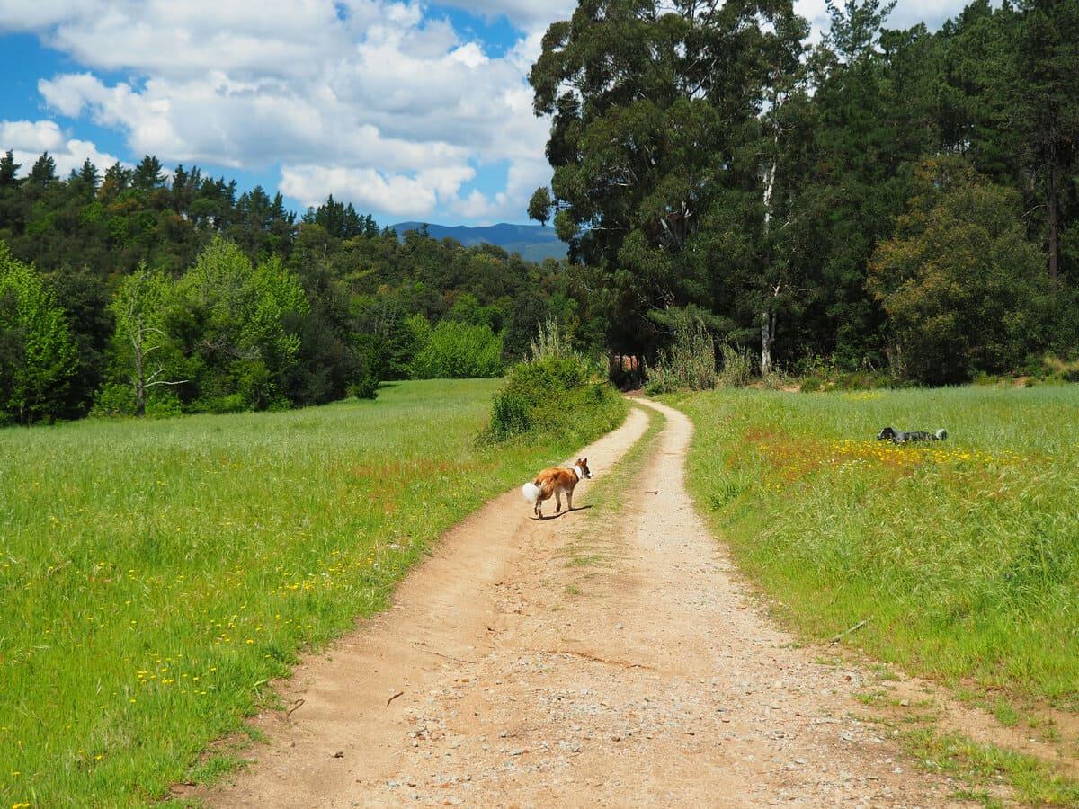 Vall d'Olzinelles con perro