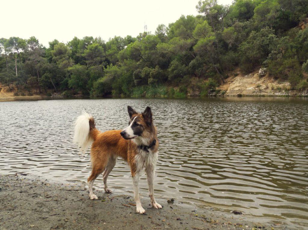 Llac petit de Terrassa con perro
