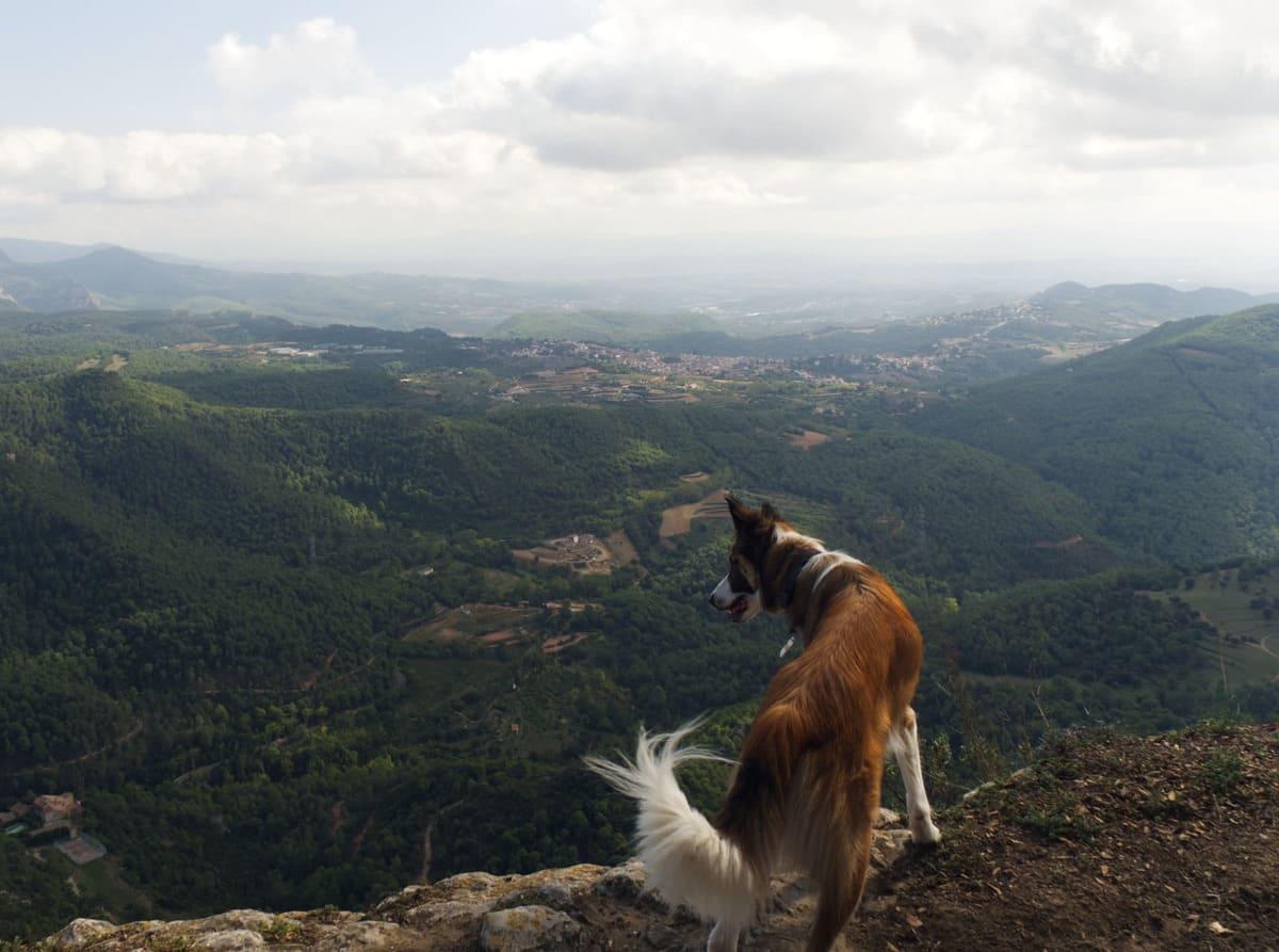 Sant Sadurní de Gallifa con perro. 100 cims