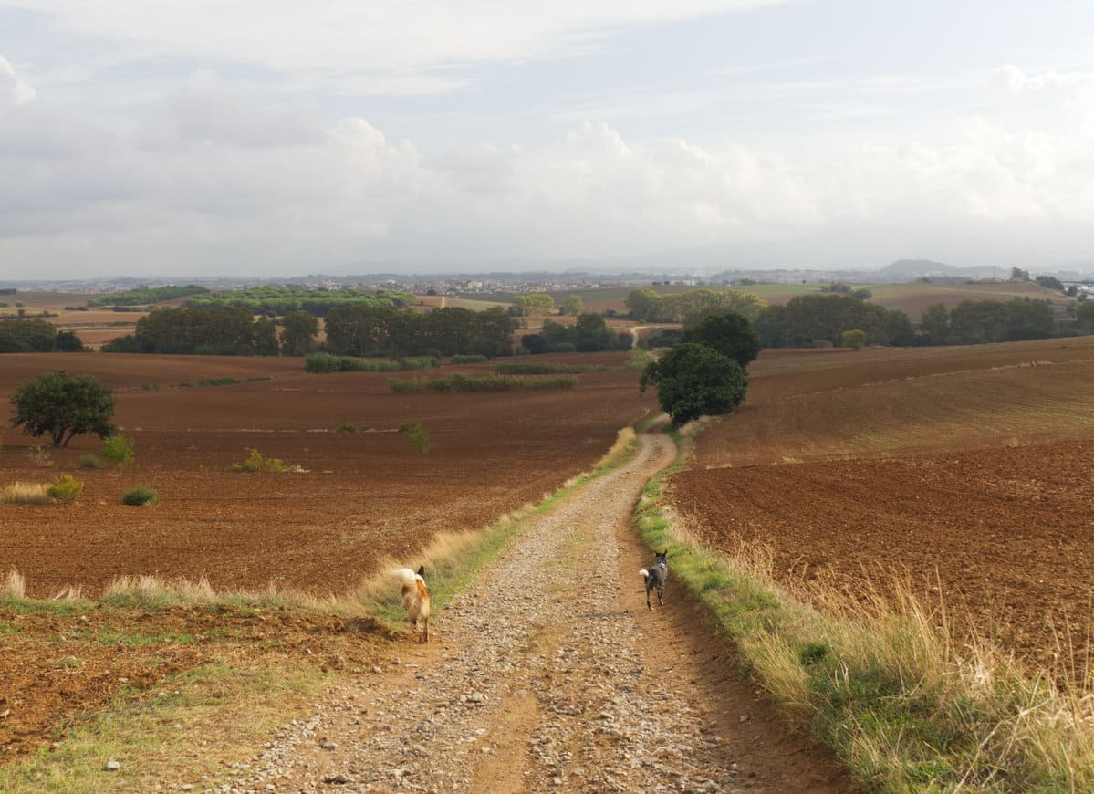 Els Gallecs con perro