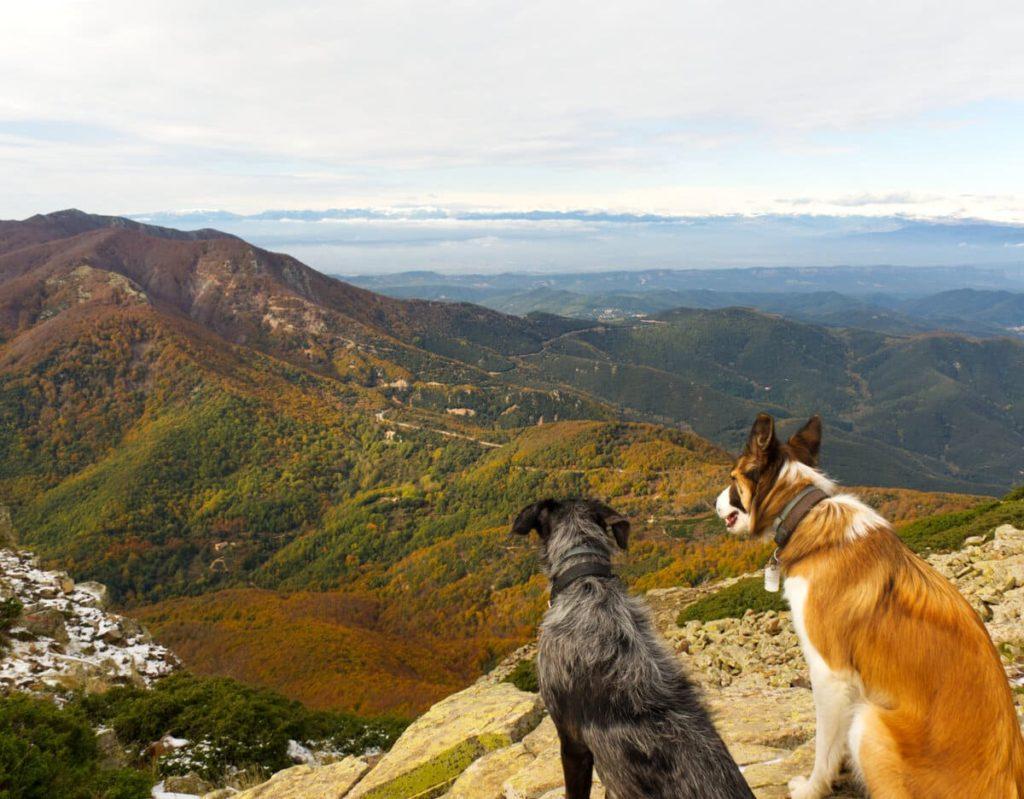 Turó de l'Home i les Agudes con perro. 100 cims