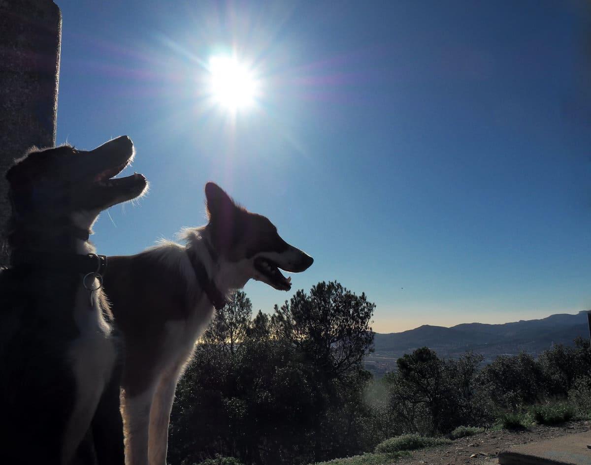 Puig Madrona con perro. 100 cims