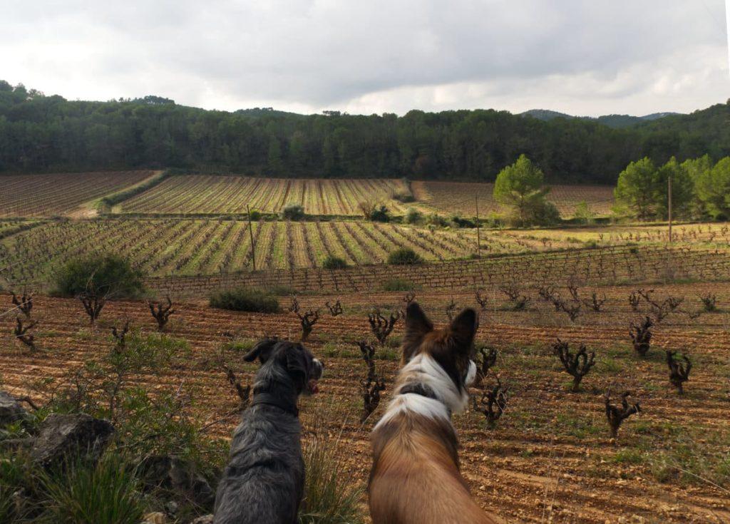 La Vall d'Olivella con perro