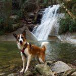 Riera de Gualba con perro