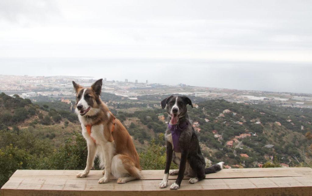 Castell de Burriac con perro. 100 cims