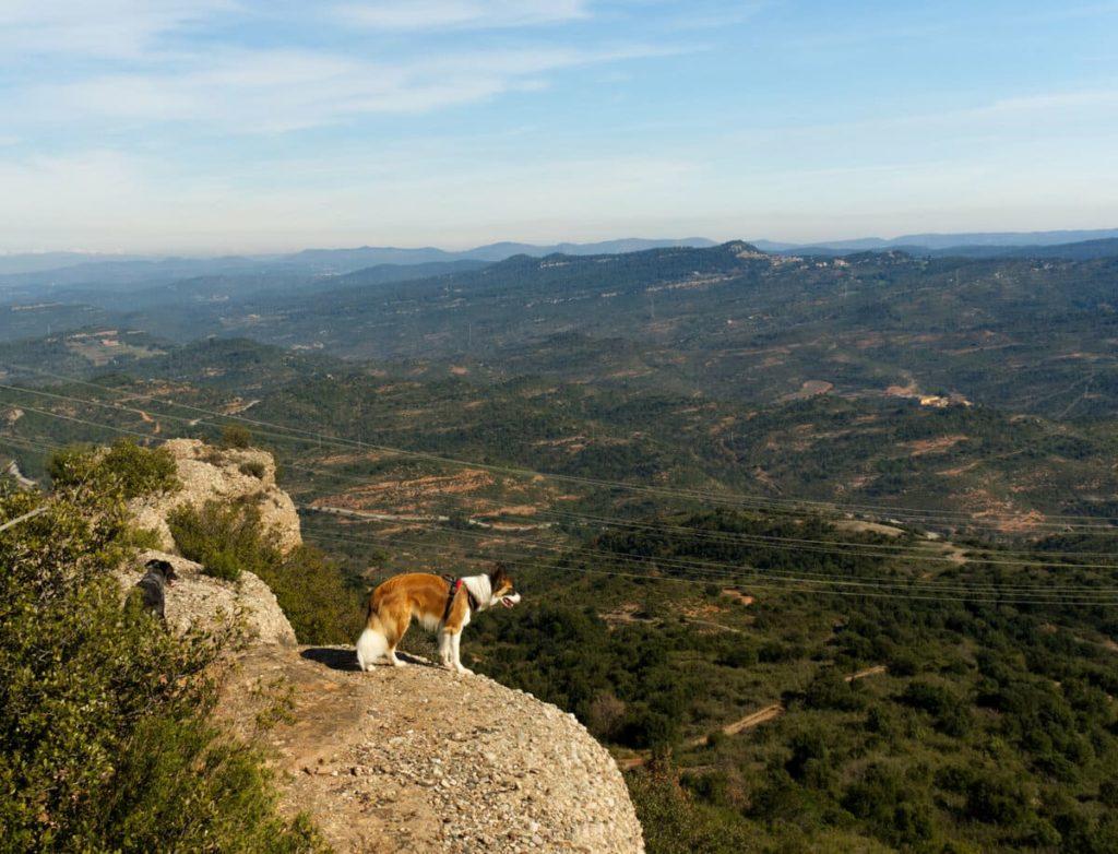 Roca Sereny con perro. 100 cims