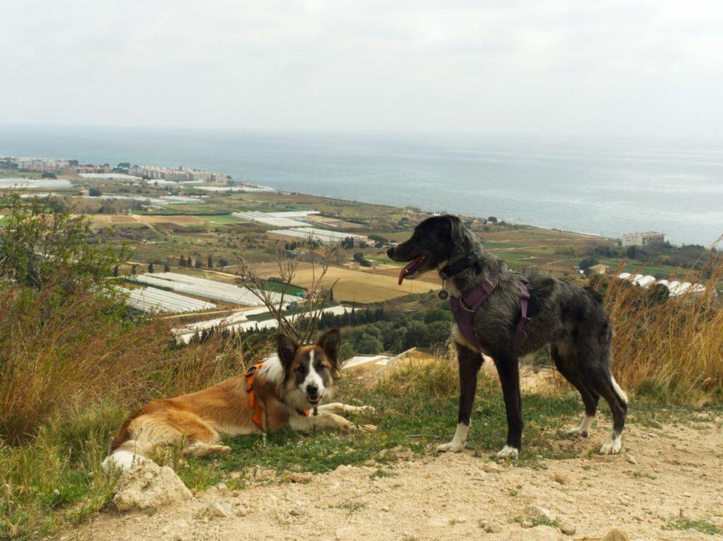 Turo Onofre Arnau con perro. 100 cims