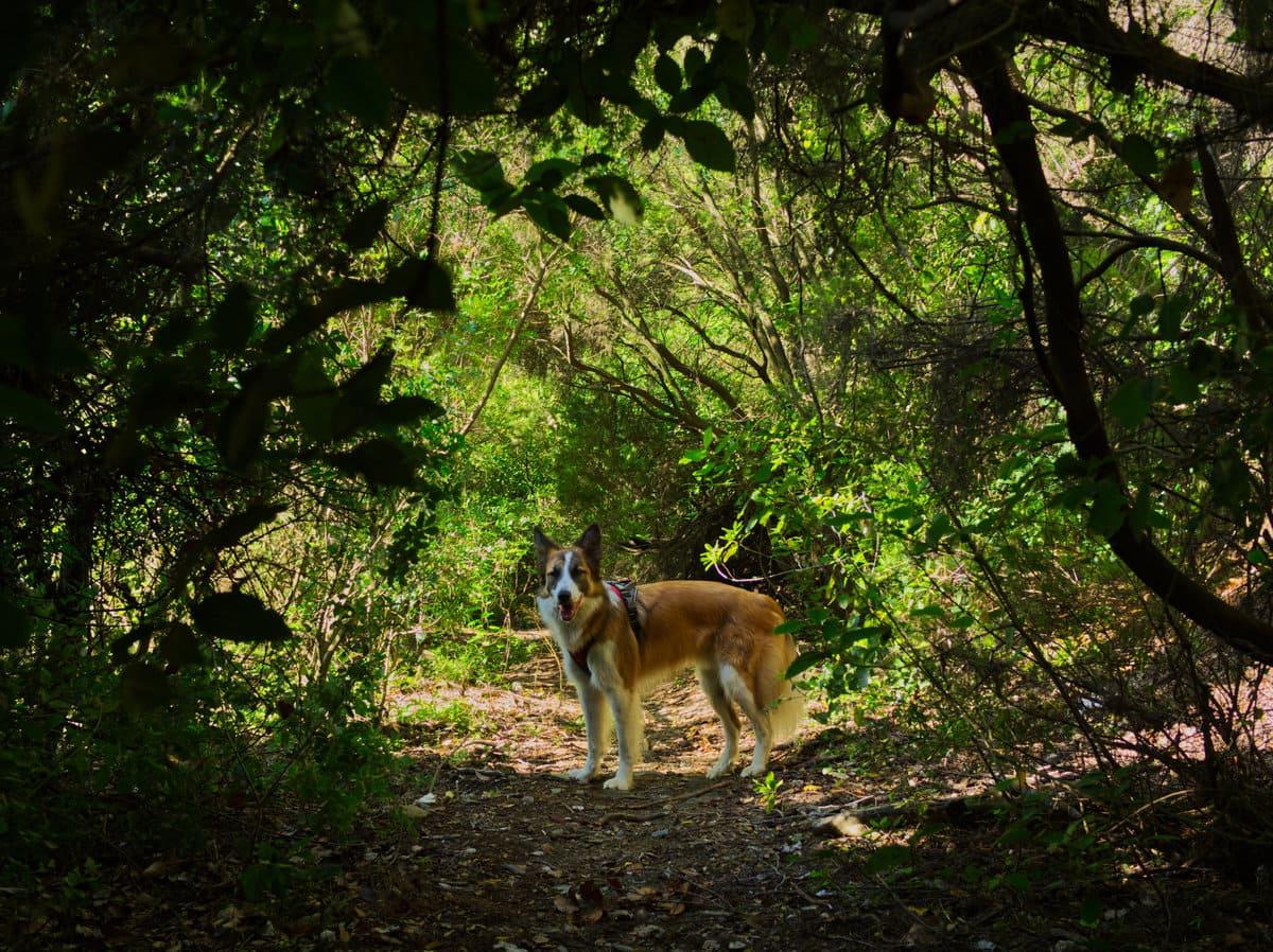 Vall de Sant Iscle con perro