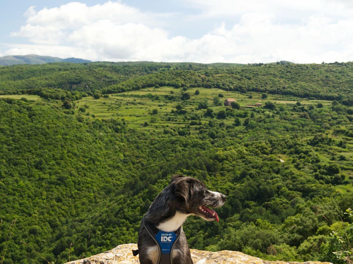 El Tagamanent con perro. 100 cims