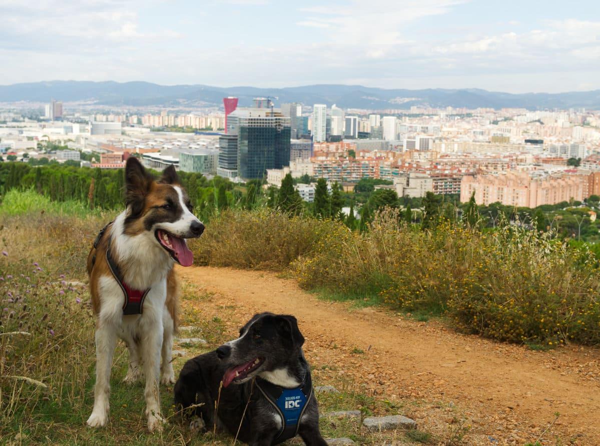 Catell de Montjuic con perro