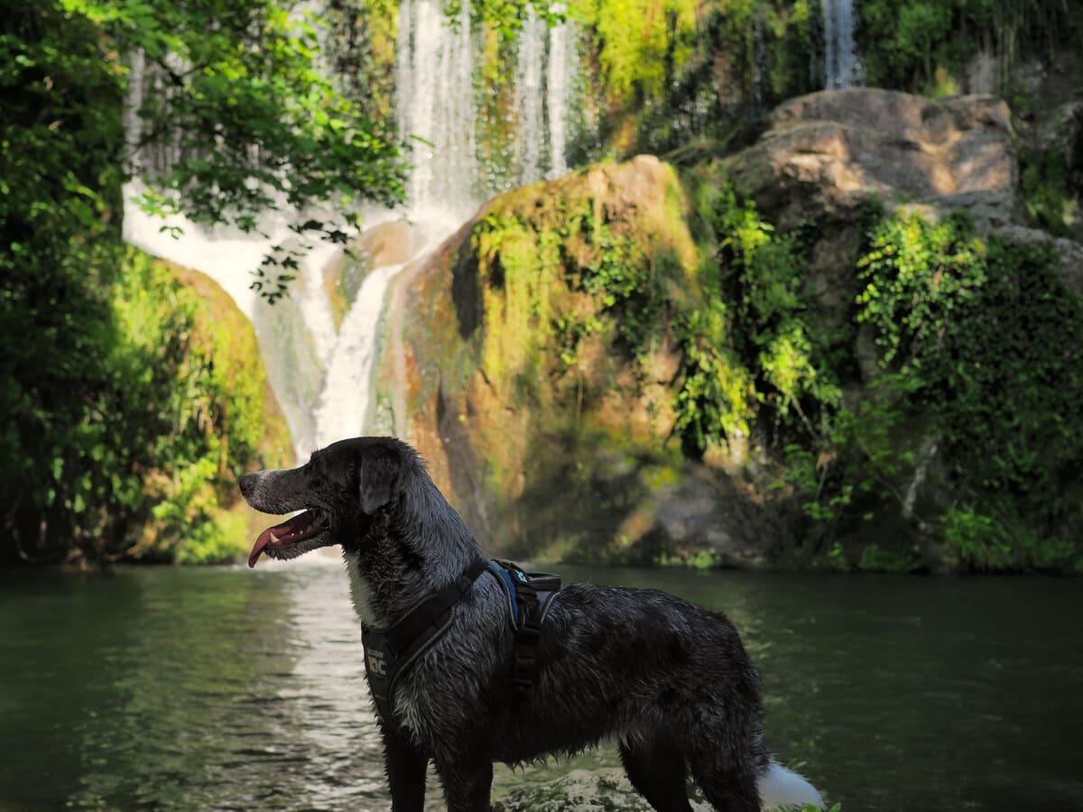 Gorg de Can Batlle con perro