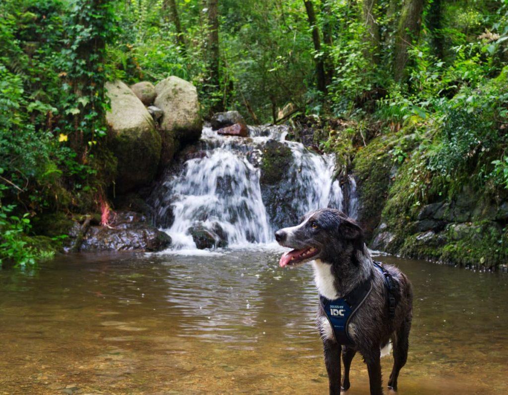 Riera de Vallcàrquera con perro
