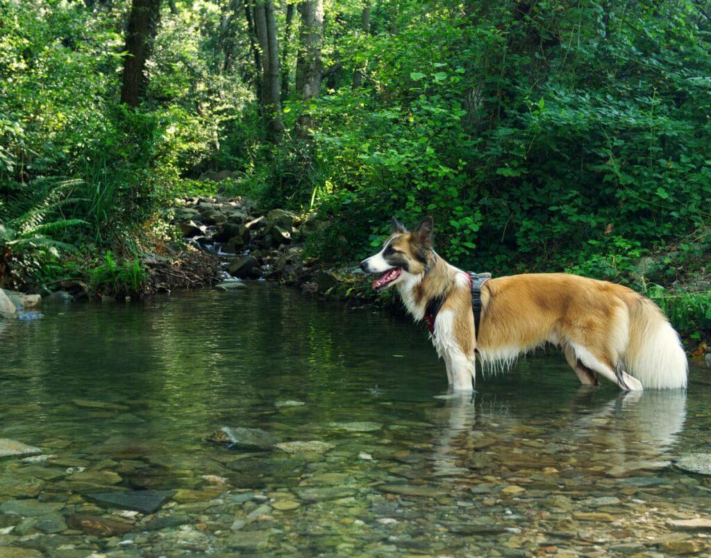 Pantà i riera de Vallforners con perro