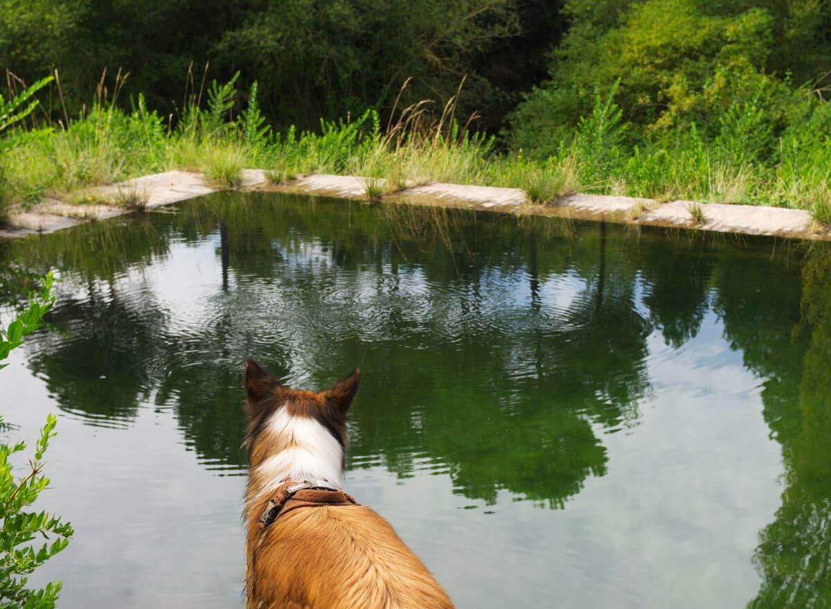 Nacimiento rio Ripoll con perro