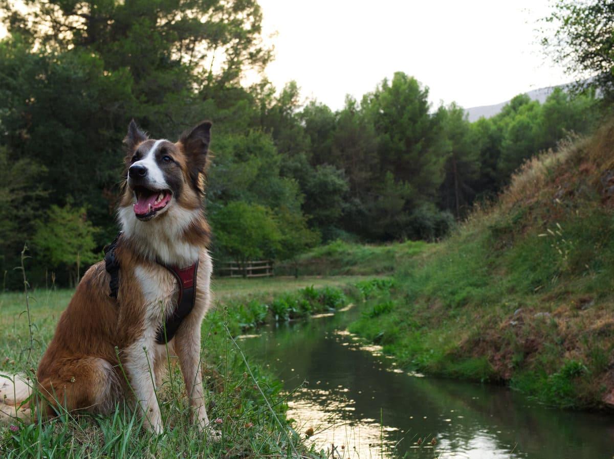 Camino de la sèquia con perro