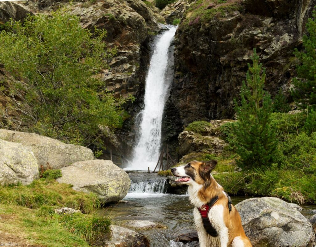 Cascada de Riqüerna con perro