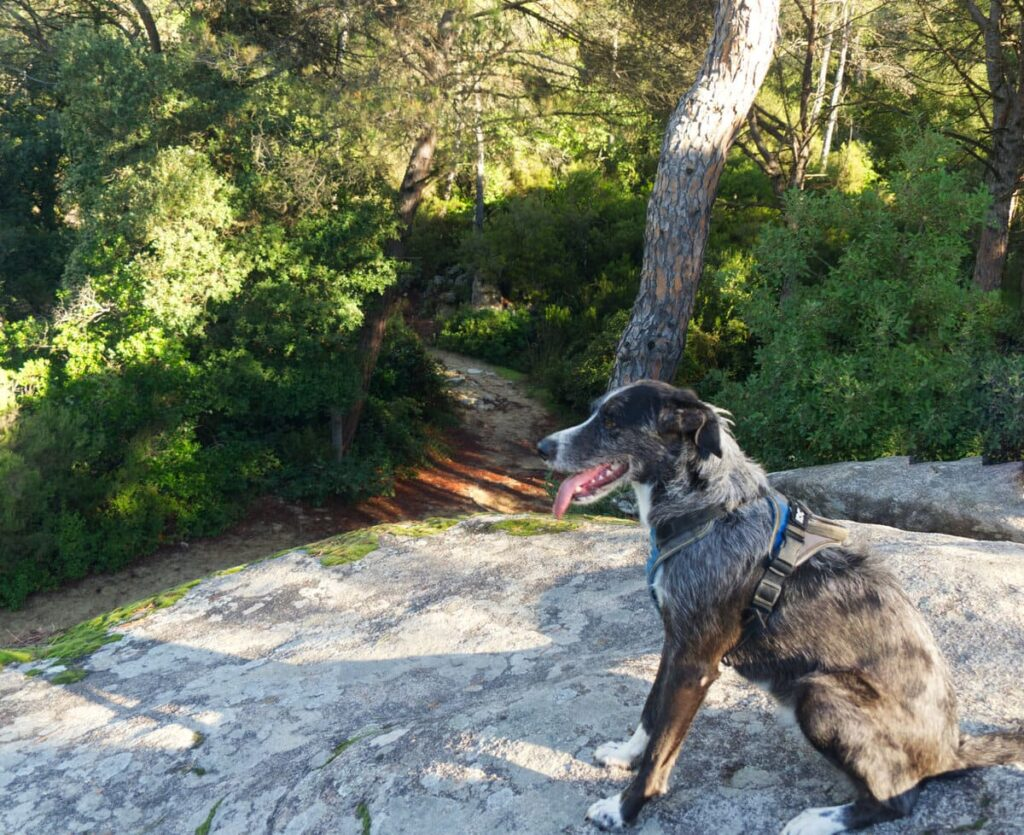 La Roca Prehistórica con perro