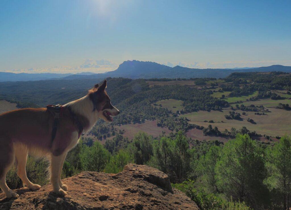 Cogulló de Cal Torre con perro