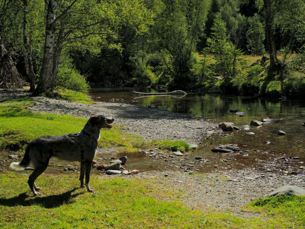 Pla de Boavi con perro