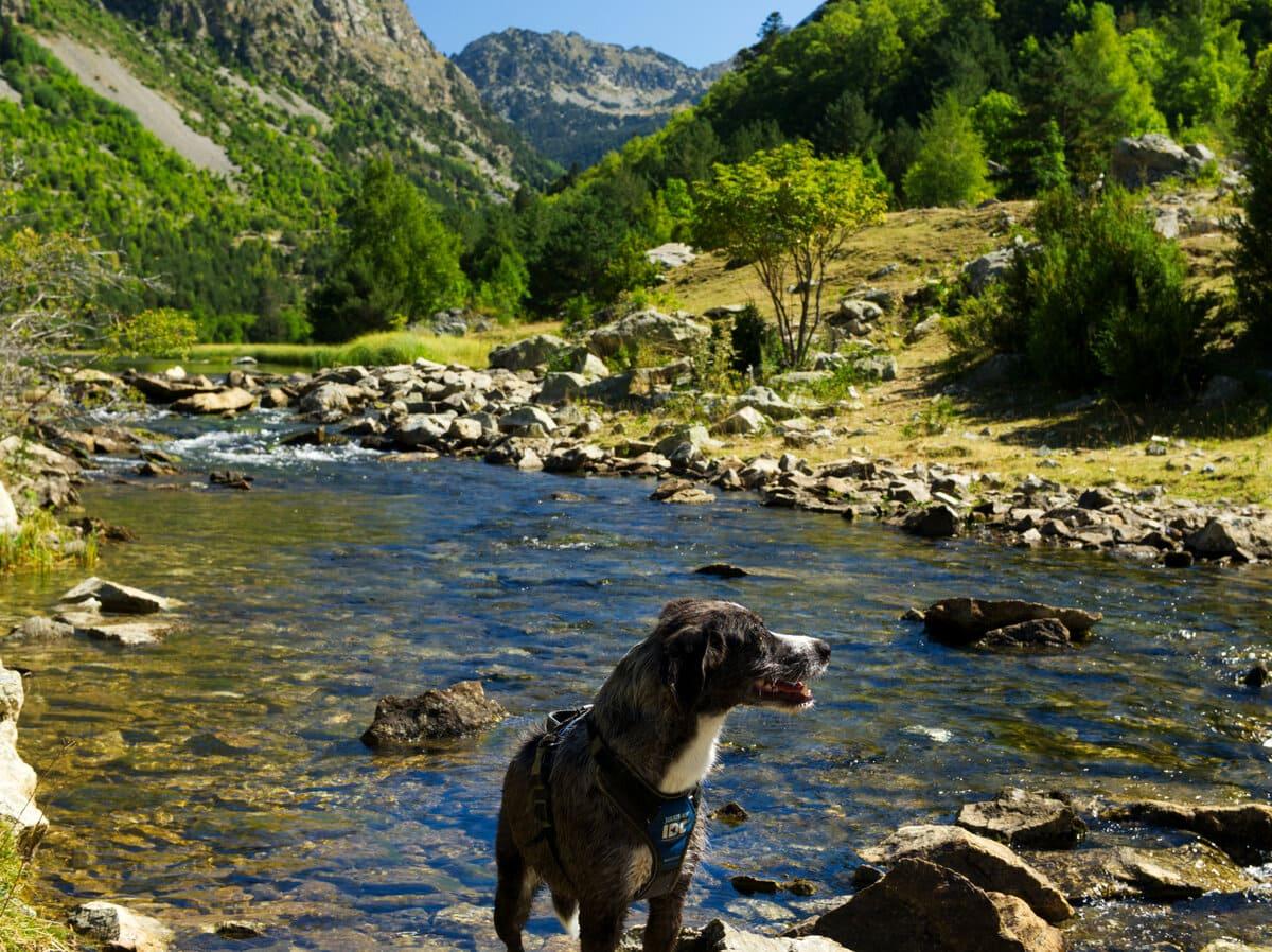 Vall Sant Nicolau con perro