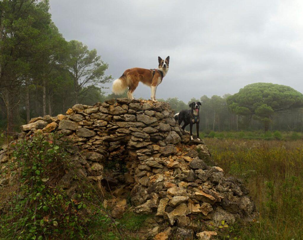 Ruta del Vent con perro