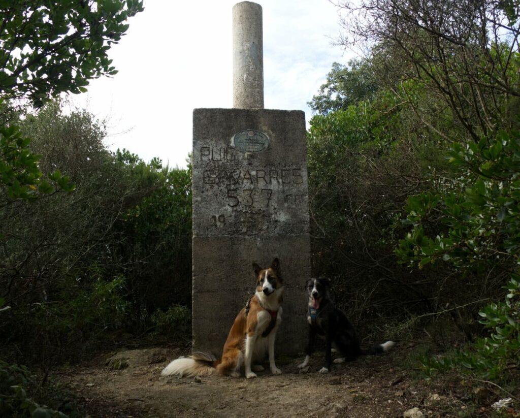 Puig Arques i Gavarres con perro