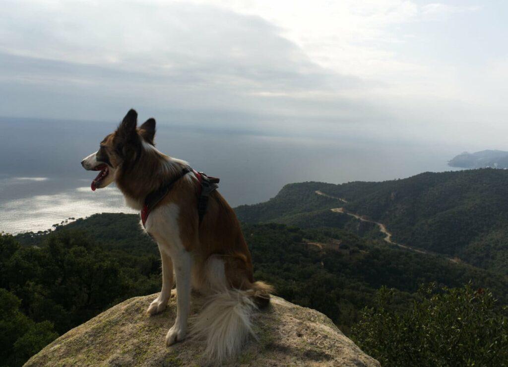 Puig Gros con perro