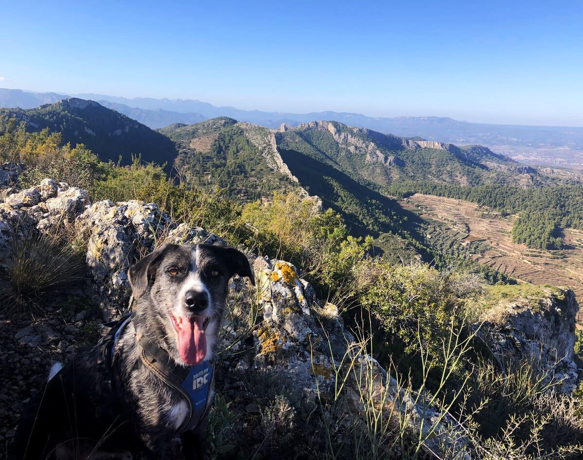 Cami de la Llena con perro copia