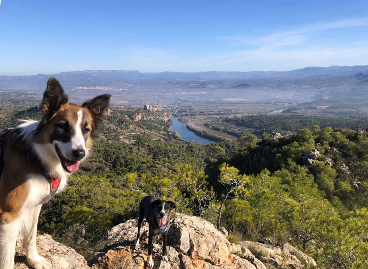 Talaia de Miravet con perro