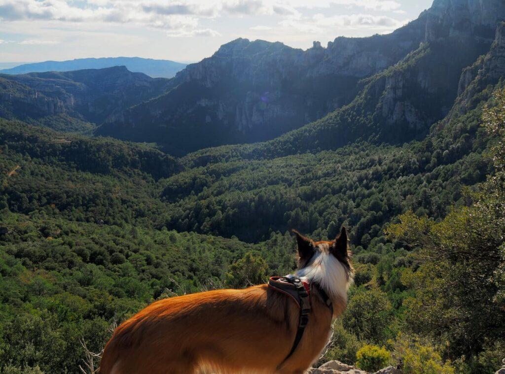 La Vall con perro
