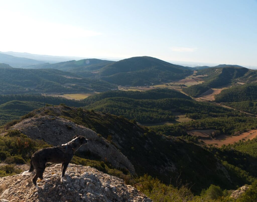 Sant Miquel del Montclar con perro