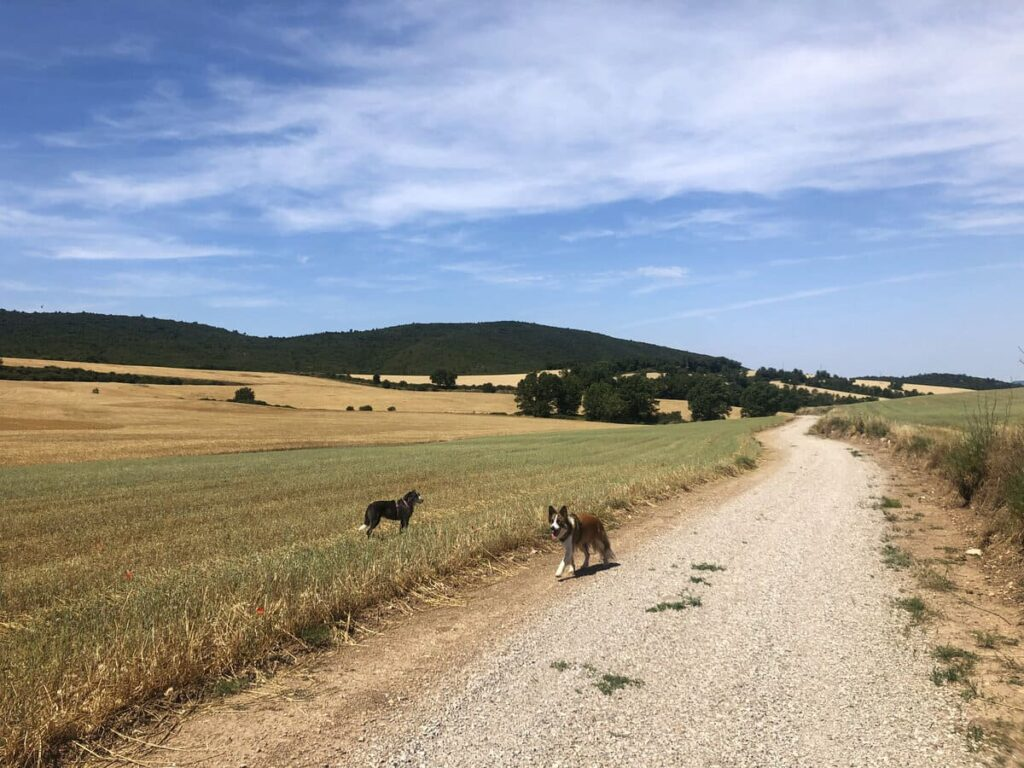 Sant Magi de Brufaganya con perro